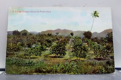 Puerto Rico Porto Young Orange Grove Postcard Old Vintage Card View Standard PC