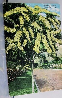 Hawaii HI Honolulu Golden Shower Postcard Old Vintage Card View Standard Post PC