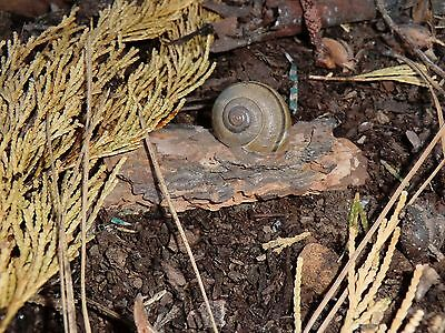 Real Snail Shell Geocache on bark Rite in the Rain Paper Logs Geocaching Cache