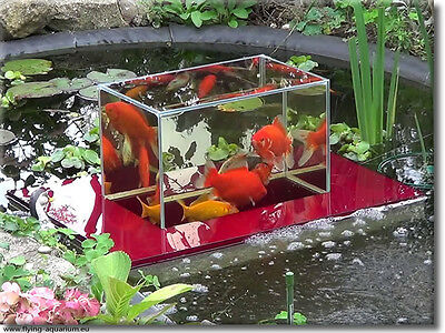 Flying Aquarium Linear 2500 fish observation Gartenteich Fische Aquarium Koi