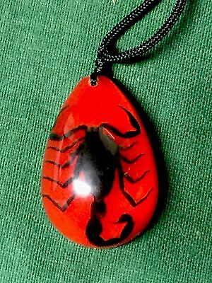 Real Large Scorpion Necklace