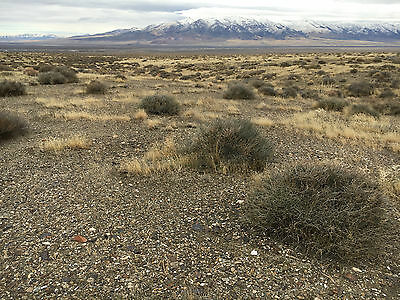 Rare gold claim in Rye Patch/Mt Majuba NV - Section 08