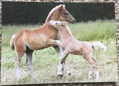 Postcard of Pony / Horse and Foal -  Czech Republic Card