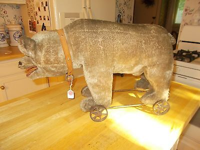 Early 1900S Large Sized Mohair Bear On Metal Wheels With Teeth And Leather Colla