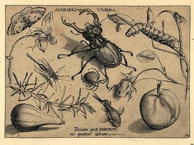 Insects Fruits Vintage Engraving Wall Print POSTER UK