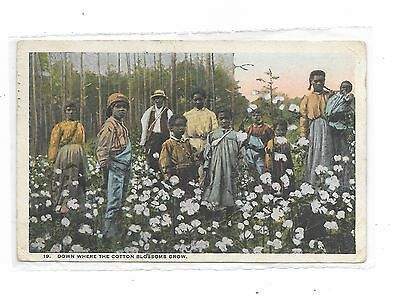 """""""Down where the cotton blossoms grow"""" Vintage 1924 Tampa, FL - Wolcott, NY"""