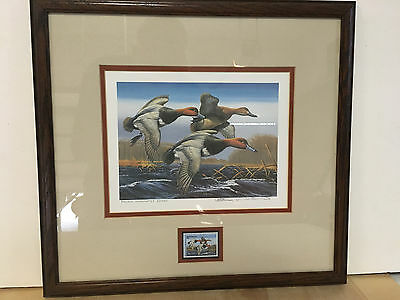 1987-88 Federal Duck Stamp and Print by Arthur Anderson, matted and framed