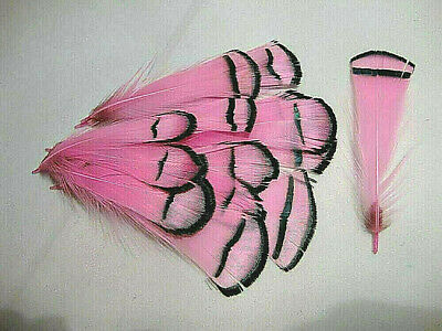 50 Seconds Mixed Dyed Lady Amherst Pheasant Body Plumage Feathers US Seller