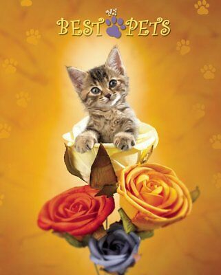 New Cat amongst the Roses My Best Pets Mini Poster