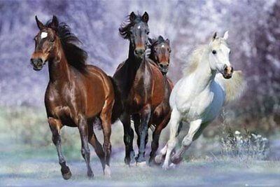 New Four Horses Galloping Bob Langrish Poster