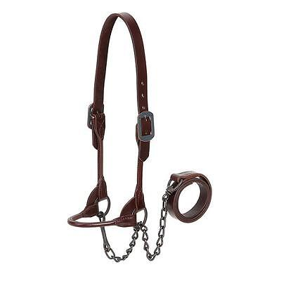 Weaver Leather 4-H Cattle Show Halter with Lead, Brown, Medium