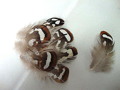 "US Seller 20 /""Smallies/"" Mixed Colors Chukar Pheasant Body Plumage Feathers"