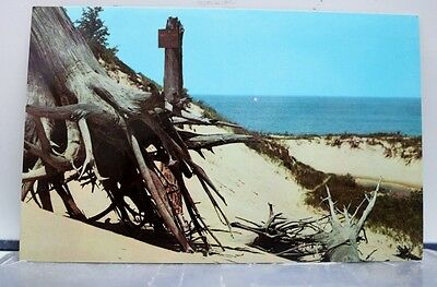 Indiana IN Chesterton Dunes State Park Lake Michigan Windblown Trees Postcard PC