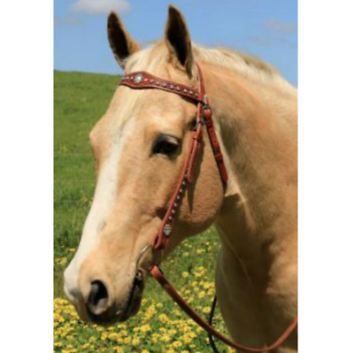 NEW Cluster of Jewels Western Bridle Bridles Horse Riding Care Grooming