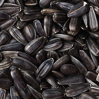 30Kg (2x 15Kg) Black Sunflower Seeds Wild Bird Food bigger value 15Kg 20Kg 25Kg