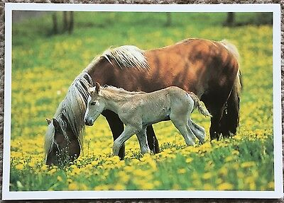 Postcard of Horse / Mare & Foal - German Card