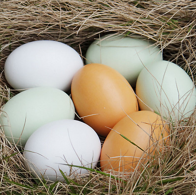 Wooden Fake Artificial Eggs Kitchen Decorative Kids Play Toys painting Craft New
