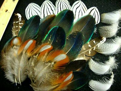 #BB-25 Pc.Mixed Feathers Peacock-Pheasant-Mallard- US Seller