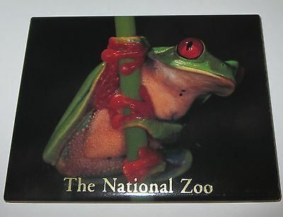 Tree FROG Magnet Fridge National Zoo Green Red Eyes Detailed Realistic New