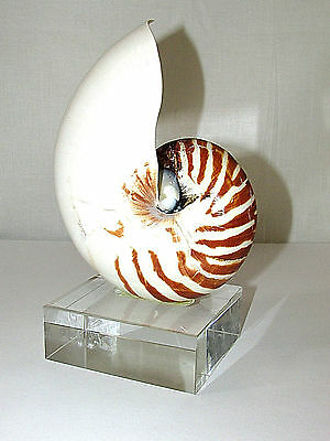 TWO'S COMPANY Nautilus Shell Transitional Sculpture On Glass Stand Beach Decor