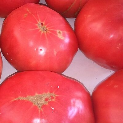 Cretan Traditional Tomato Variety Vegetable 15+ Seeds - Lycopersicum esculentum