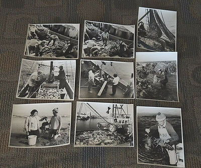 9 REAL PHOTOS WELLINGTON NZ COMMERCIAL FISHING HARBOUR CRAB POT ABALONE 1970s #4
