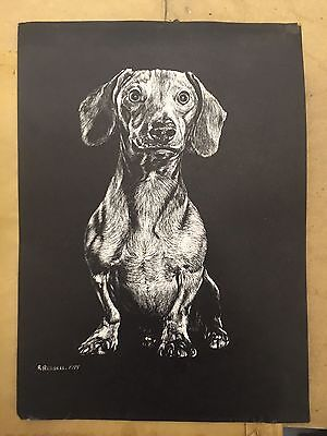 Vintage Dachshund Picture By R Russell Black And White