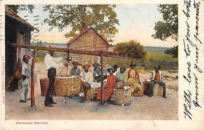 "Workers ""Weighing Cotton"" Black Americana PM New Orleans, LA Postcard 1905"