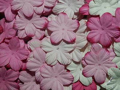 BULK 38mm Paper Flower Petals MPFF1D/PW: Scrapbooking Cardmaking Party Collage
