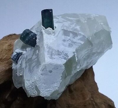 Blue Tourmaline  Protruding out of Quartz Crystal Collectable Mineral Specimen