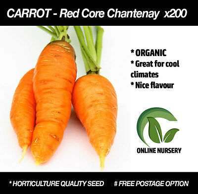 Carrot 'Red Core Chantenay' x200 seeds | HEIRLOOM |Garden vegetable Cool climate