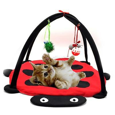 AU Pet Cat Puppy Kitten Tent Bed Soft Mat Exercise Pad Cushion With Hanging Toy