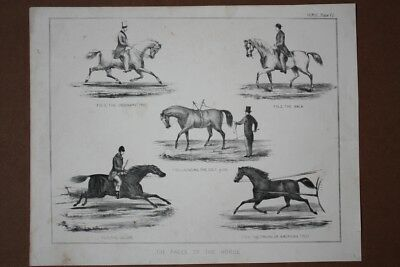 The paces of the horse, Pferde Gangarten, Lithographie um 1875, Blattgröße: 22,5