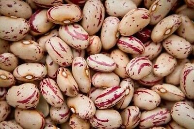 BORLOTTI BEAN  Red 50 Seeds