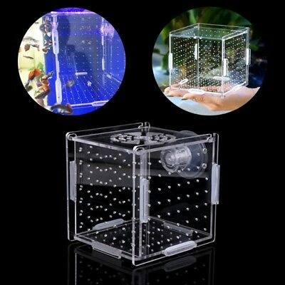 Acrylic Fish Breeding Isolation Aquarium Box Breeder Hatchery With Suction Cup