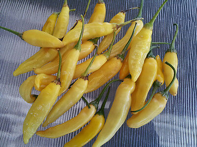 Lemon Drop/Aji Limon Popular Seasoning Chilli Pepper - 10 Seeds