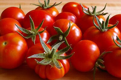 Beefsteak tomato - One of the Largest Varieties of Cultivated Tomatoes -10 Seeds