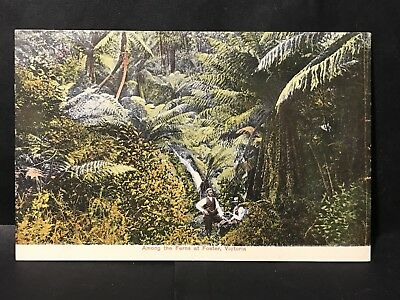 Antique Coloured Photo Postcard AMONG THE FERNS AT FOSTER, VIC Gippsland, W.T.P.