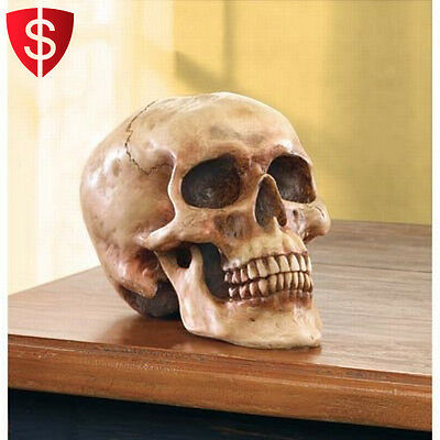 Human Skull Replica Halloween Decoration Realistic Life Size Gothic Bonehead