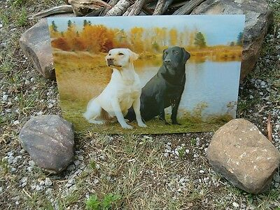 3D  Picture Of Black And Yellow Lab Retriever Dogs , Amazing 3D Effect ,