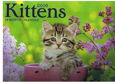 "KITTENS  -  2016 - 16 MONTH  WALL CALENDAR FULL SIZE NEW AND SEALED 11""x12"""