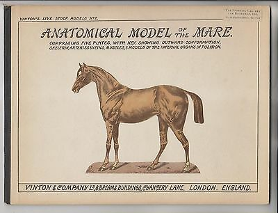 Circa 1900 Booklet - Anatomical Model Of The Mare - Vinton & Company - London