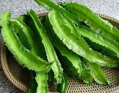 BEAN 'Winged' 15 seeds asian vegetable