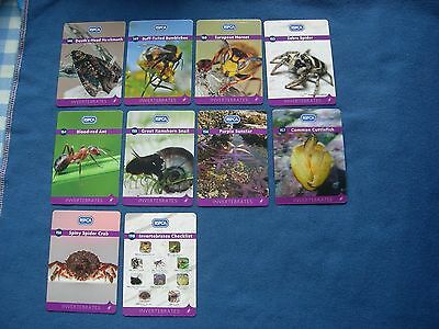 Rspca Trading Cards - Spares Lot Of 10 - Invertebrates