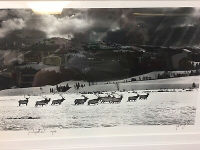 """Ross Hall 1936 """"Rhythm"""" Elk Photo In Wyoming Signed Framed Sandpoint ID"""