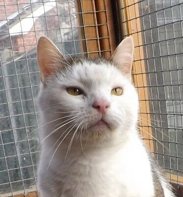 Sponsor An Old Cat - Basil - Second Chance Cat Rescue Keelby