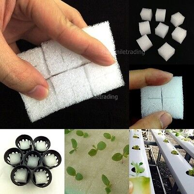 """100x 1"""" CUBIC SPONGE FOR HYDROPONIC AEROPONIC PLANT SEED GROW NET POT CUP HOLDER"""