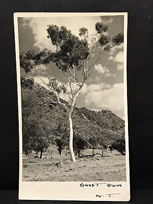 Vintage Real Photograph Postcard size GHOST GUM Tree NORTHERN TERRITORY