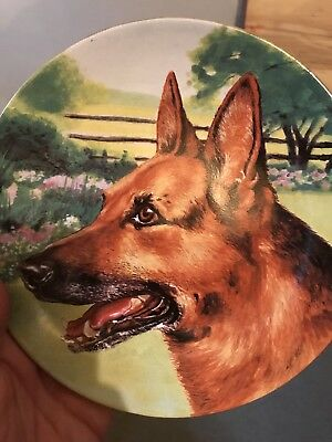 German Shepard plate size of a salad plate
