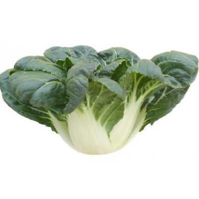 2000 Canton PAK CHOI Bok Choy Chinese Cabbage Green Vegetable Seeds High Quality